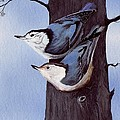 Nuthatch Pair by Linda Francis