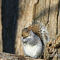 Nuts by Neal Eslinger