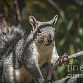 Nuts Please by Mitch Shindelbower