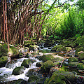 Banyan Nuuanu Stream by Kevin Smith