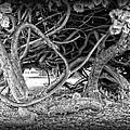 Oahu Ground Vines - Hawaii by Daniel Hagerman