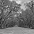 Oak Alley 3 Monochrome by Steve Harrington