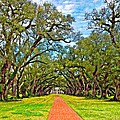 Oak Alley 3 Oil by Steve Harrington