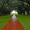 Oak Alley Path by Denise Mazzocco