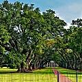 Oak Alley Plantation 2 by Steve Harrington