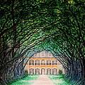 Oak Alley Plantation by Aimee Mouw