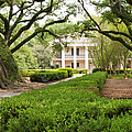 New Orleans Oak Alley Plantation by JG Thompson