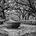 Oak Alley Plantation Landscape In Bw by Kathleen K Parker