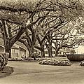 Oak Alley Slave Quarters Sepia by Steve Harrington