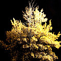 Oak At Night by Travis Truelove