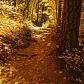Oak Creek Trail by Tam Ryan