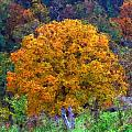 Oak In Autumn Color by George Ferrell
