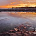 Oak Leaf And Beach Sunset by Charline Xia