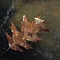 Oak Leaf On Ice by Jim Vance
