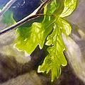 Oak Leaves by John Norman Williams