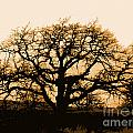 Oak Lit by Jacqueline  DiAnne Wasson