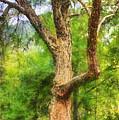 Oak On The Etowah by Daniel Eskridge