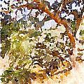 Oak by Shannon Grissom