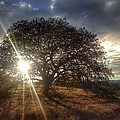 Oak Tree At The Plateau by Christine Owens