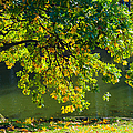 Oak tree by the pond - Featured 3