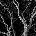 Oak Tree Canopy Under A Night Sky by Scott Lenhart