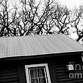 Oak Tree Farm House by Chad Bennett
