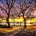 Oak Trees At Sunrise by Debra and Dave Vanderlaan