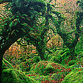 Oak Trees In A Forest, Wistmans Wood by Panoramic Images