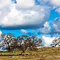 Oaks And Clouds by John Crowe