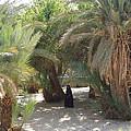Oase Rest Desert Sinai Egypt by Colette V Hera  Guggenheim