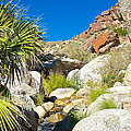 Oasis On Borrego Palm Canyon Trail In Anza-borrego Desert Sp-ca by Ruth Hager