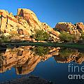 Oasis Reflections by Adam Jewell