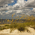 Oat And Dune Vista by Barbara Northrup