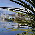 Obscured View Of Percival Landing by Jeanette C Landstrom