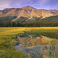 Observation Peak And Coniferous Forest by Tim Fitzharris