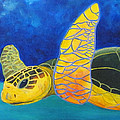 Obx Turtle by Anne Marie Brown