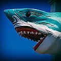 Ocean City Shark Attack by Bill Swartwout Fine Art Photography