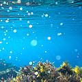 Ocean Garden by Stelios Kleanthous