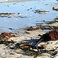 Ocean Life On The Beach by Patti Whelan