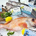 Ocean Perch On A Fish Counter by Martyn F. Chillmaid