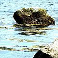 Ocean Rock by Dancingfire Brenda Morrell