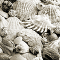 Ocean Seashells 2 B W by Andee Design