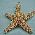 Ocean Star Fish by Kristina Deane