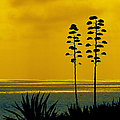 Ocean Sunset With Agave Silhouette by Ben and Raisa Gertsberg