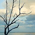 Ocean Tree by Zina Zinchik