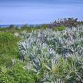 Ocean Vegetation by Louise Hill