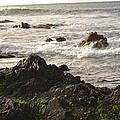 Ocean's Edge by Betsy Stevens