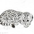 Ocelot Kitten by Kurt Tessmann