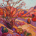 Ocotillo Shadows by Erin Hanson