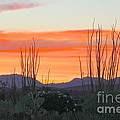 Ocotillo Sunset by Suzanne Oesterling